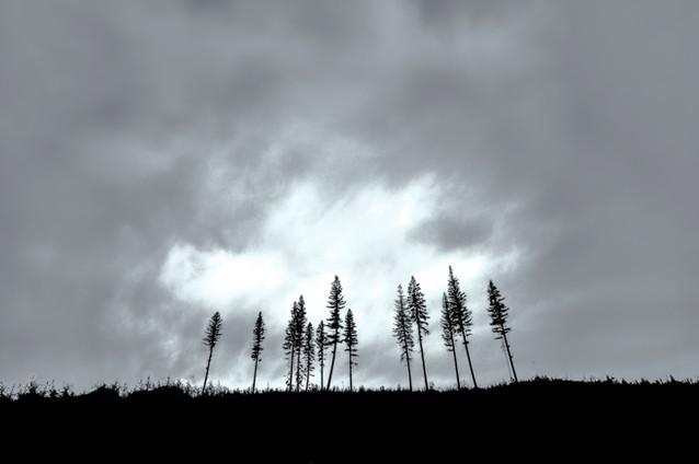 11 Trees
