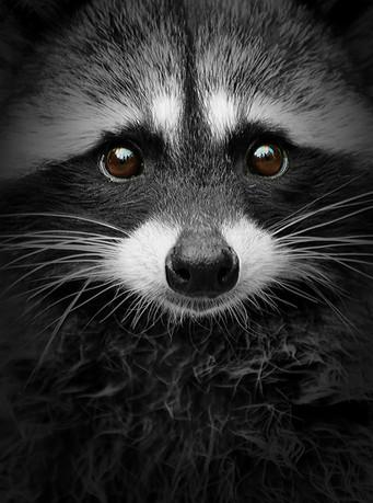Peaceful Bandit