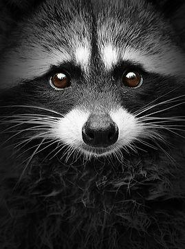Peaceful Bandit.jpg