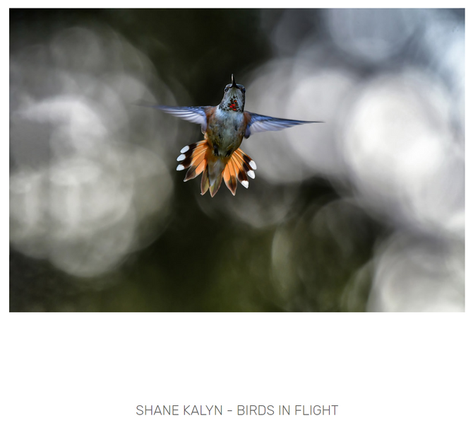Two '4 Element Photos' just awarded at the 2019 Bird Photographer of the Year contest...