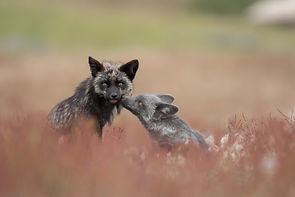 Kiss in the Grass.jpg