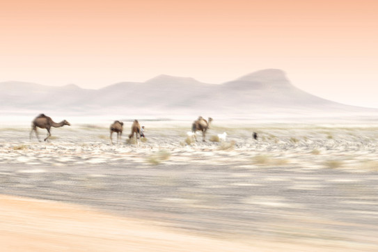Passing the Camels