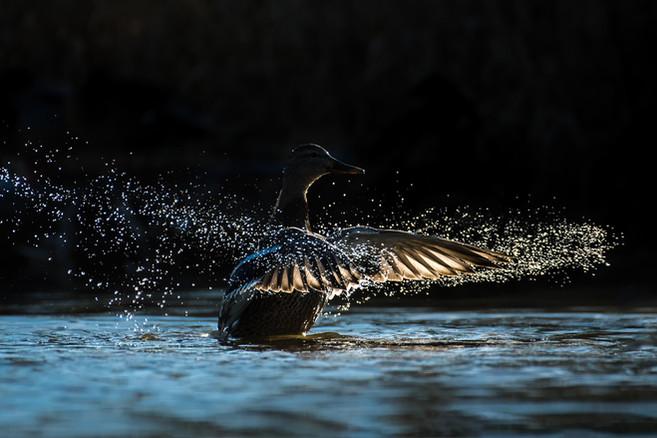 Wet Wings