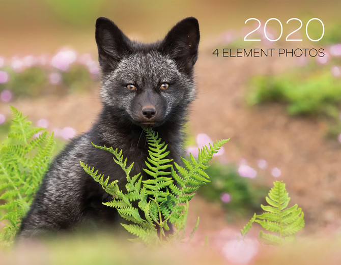 Just under $1500 donated to two animal welfare non-profits from 4EP 2020 calendar sales...