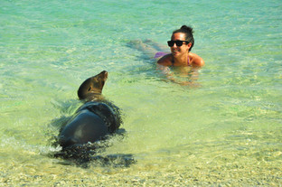Swimming With Sea Lions