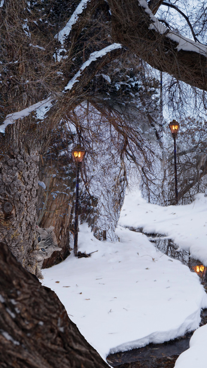 Winter Woods at the Duck Pond   2019
