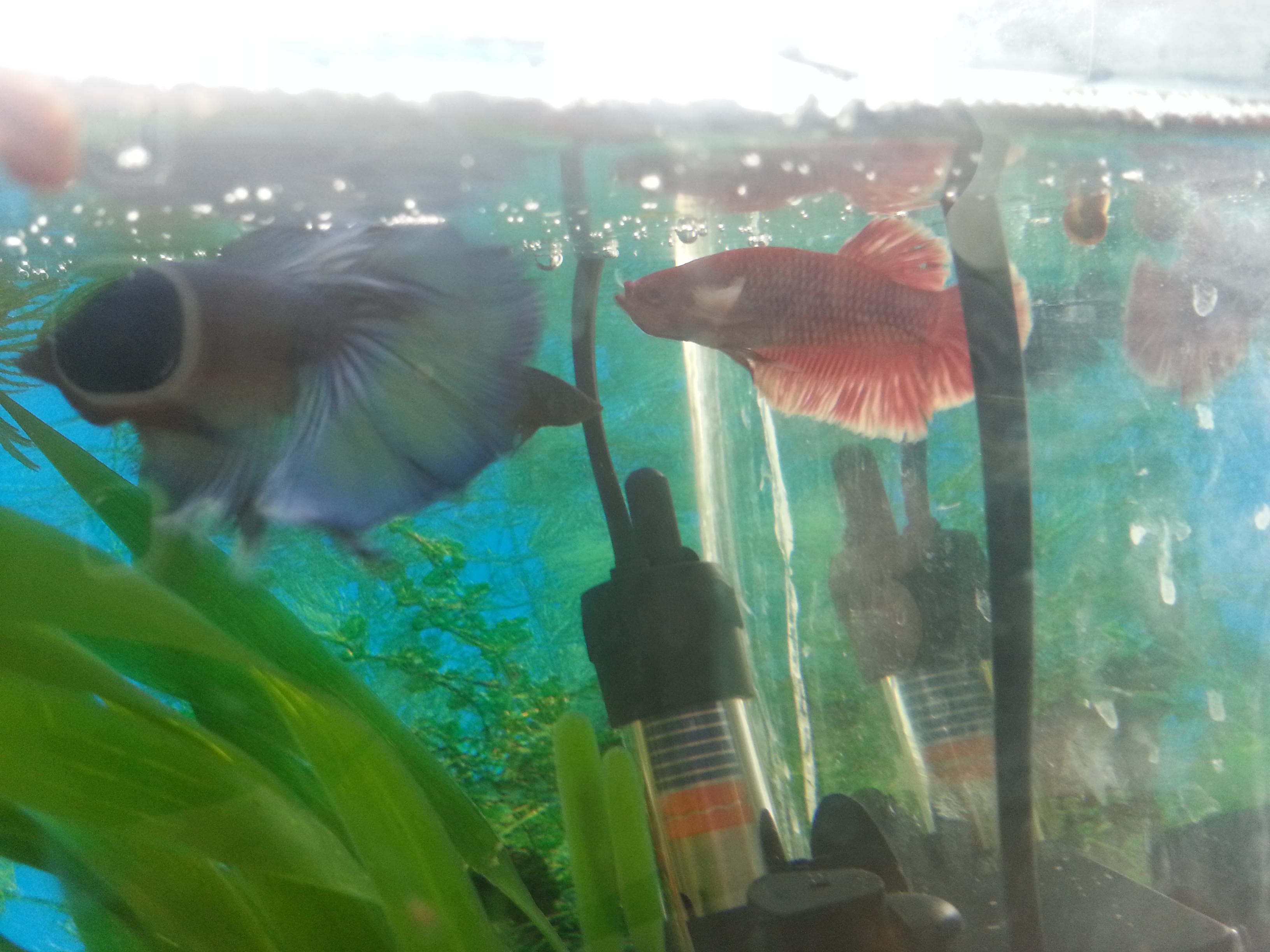 рыбы (2)