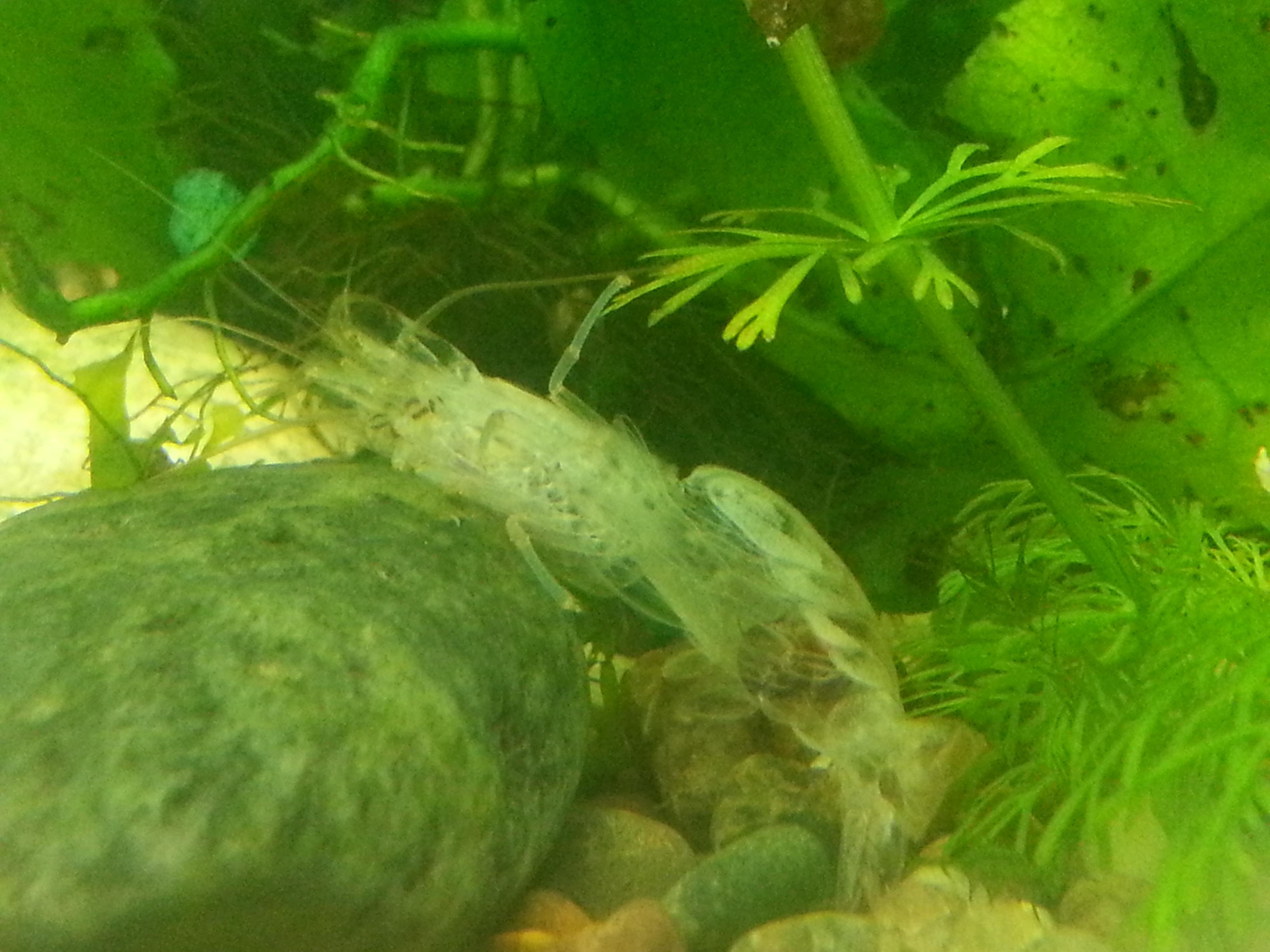 рыбы (3)
