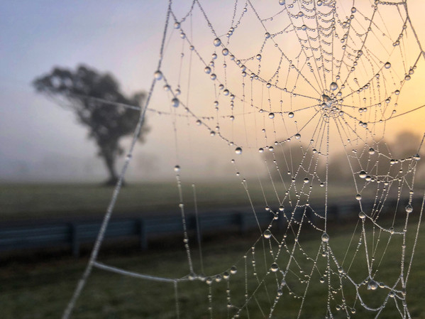 Web at Sunrise