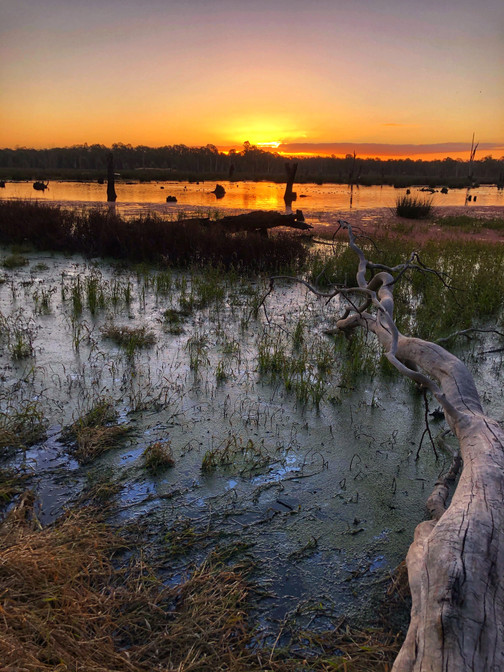 Sunset, Reedy Swamp