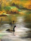 Swans at Lake Victoria