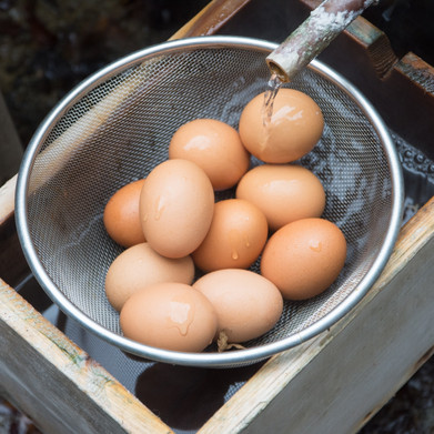 温泉卵作りも