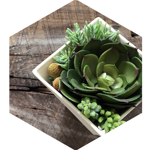Succulent Hex Tile one inch thick