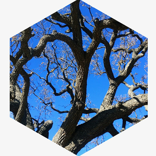 Tree Hex Tile one inch thick