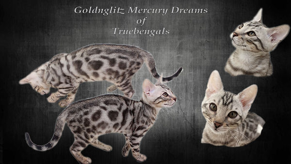 Mercury Dreams 3-4 months.jpg