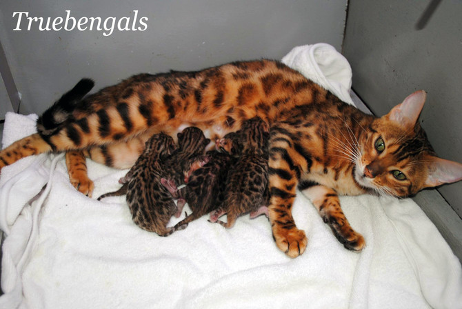 Missy had her babies!