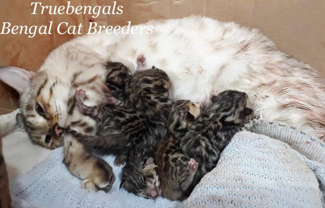 Teeko had her babies!