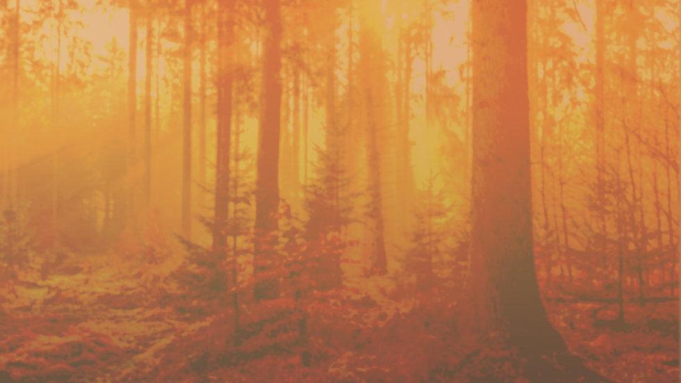 fall-Bkg.jpg
