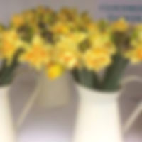 British grown narcissi