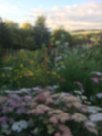 Flower Patch, Locally grown flowers, Peebles flowers, field of flowers, Scottish flowers, British flowers