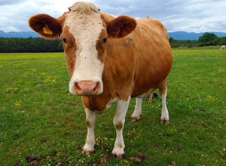 Why veganism is not always such a good idea