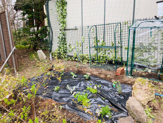 自家菜園をはじめました