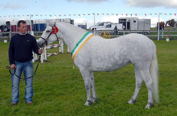 Connemara Pony.jpg