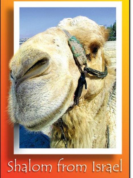 Magnet - Shalom Camel