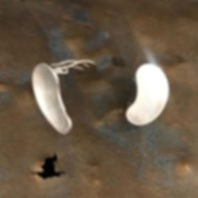 sølv øreclips alguld
