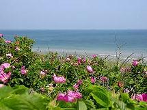 Lower Cape Beach, Cape Cod