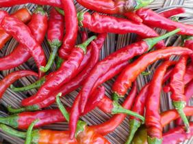 hot-pepper-cayenne-long-red_MED.jpg
