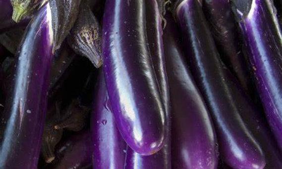 Long Purple Eggplant