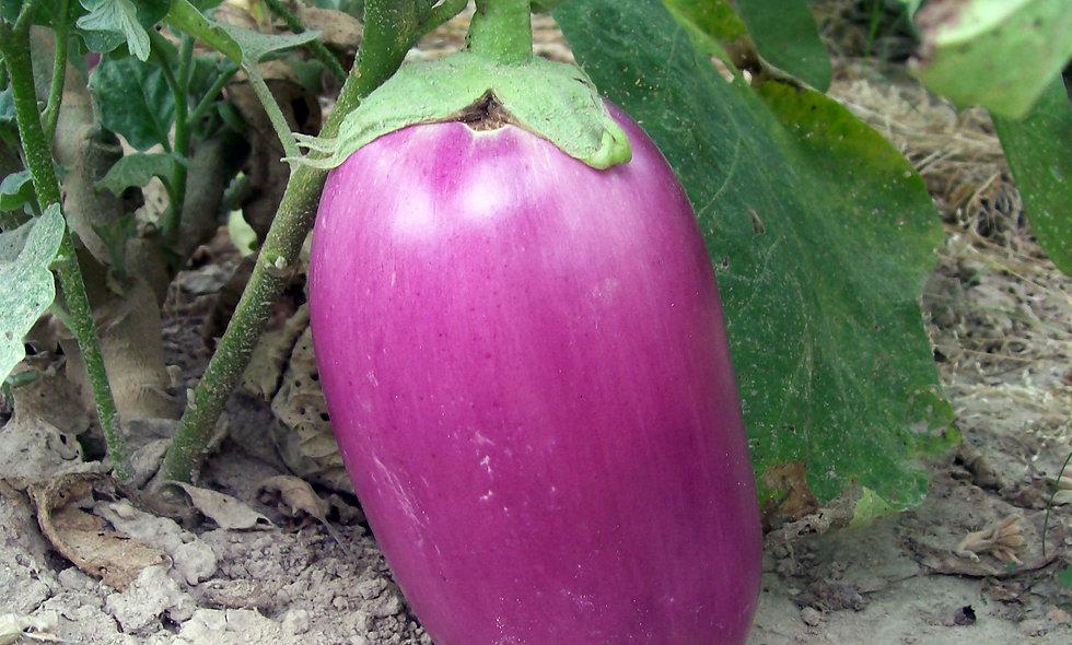 Rosita Eggplant
