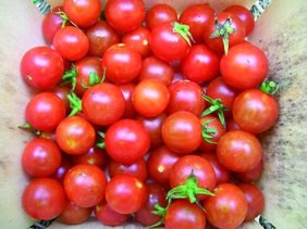 tomato-sugar-cherry_MED