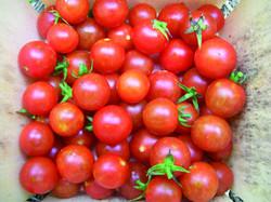 tomato-sugar-cherry_MED