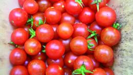 tomato-sugar-cherry_MED.jpg