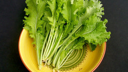 mustard-greens-southern-giant-curled_MED