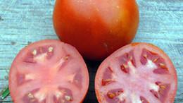 tomato-old-virginia_MED.jpg