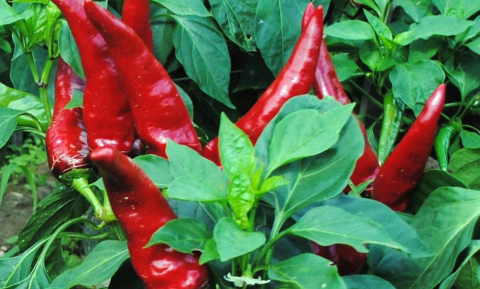 Hungarian Paprika Pepper