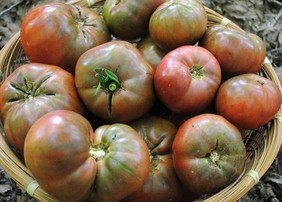 tomato-cherokee-purple_MED.jpg