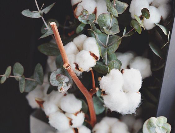 No. 10 Cotton