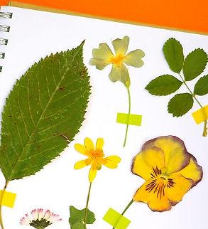PAP-653-herbier-MEA_edited.jpg