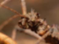 close up.jpg