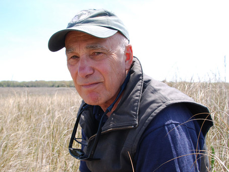 After 25 years, shorebird expert still fights to save the red knot from extinction