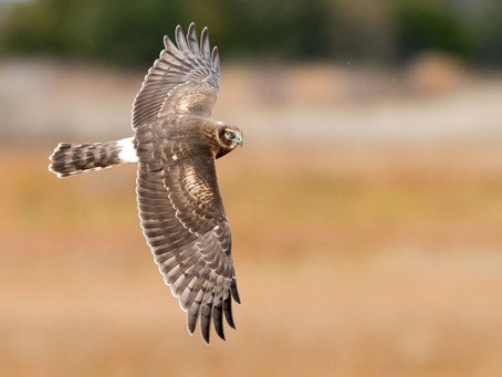 A Policy Agenda to Protect the Birds of the Delaware River Watershed