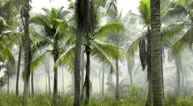 Palm%20tree%20forest_edited.jpg