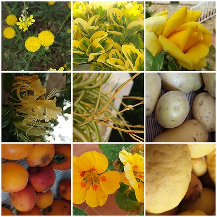 cgamma cromatica groc