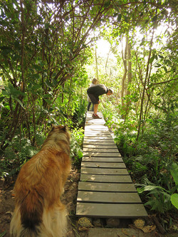 Raised Wooden Path
