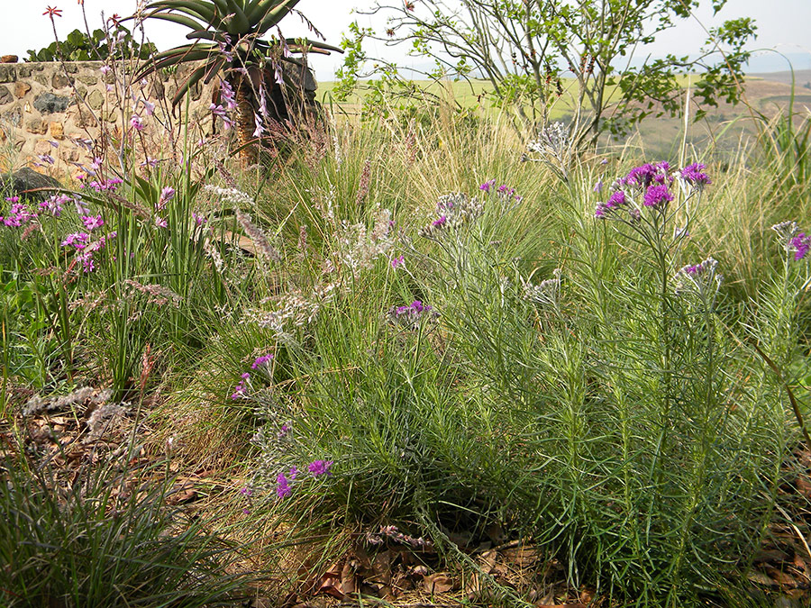 Tiny but effective grassland garden
