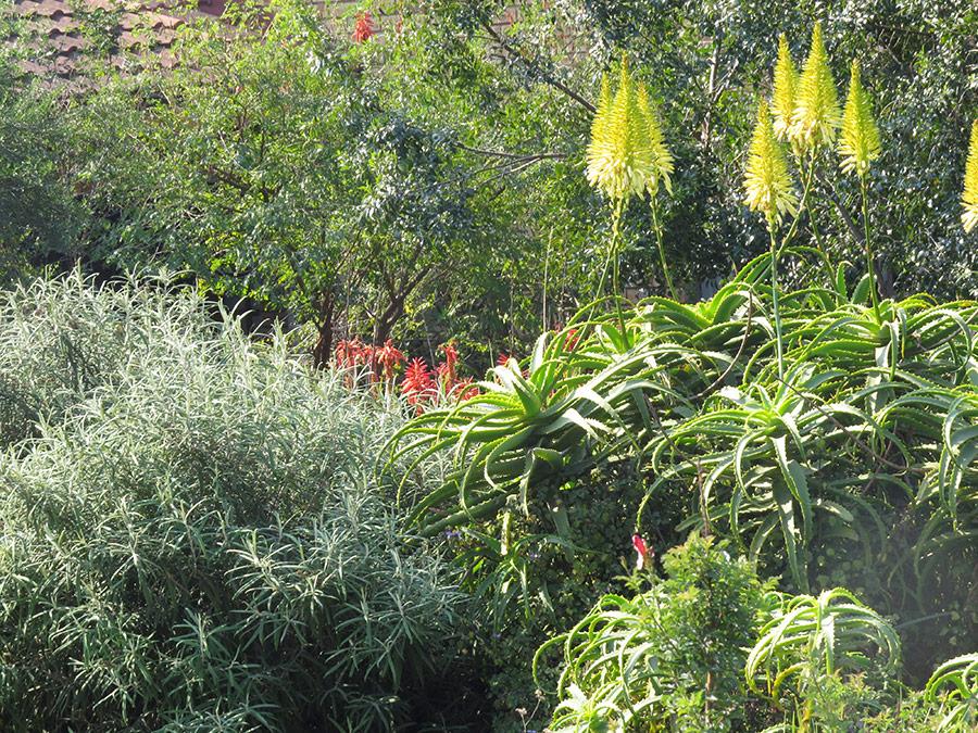 Using a variety of shrub sizes